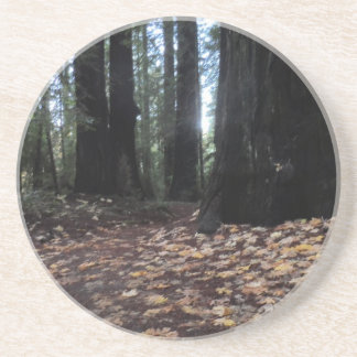 Fall Leaves in the Forest- Humboldt Redwoods Drink Coasters