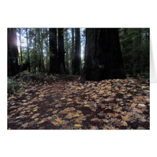 Fall Leaves in the Forest- Humboldt Redwoods Greeting Card