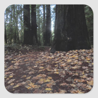Fall Leaves in the Forest- Humboldt Redwoods Square Sticker