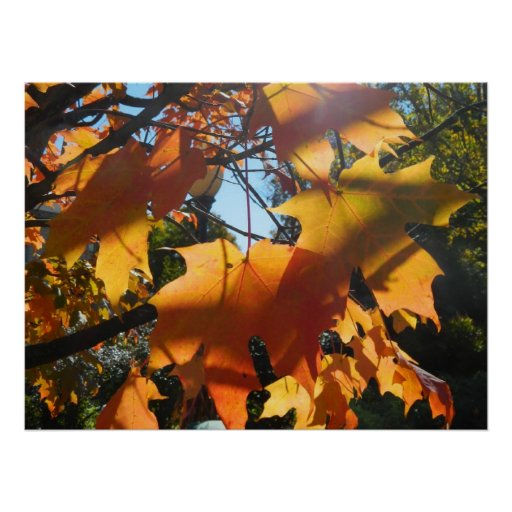 Fall Leaves in The Light and Shadows Print