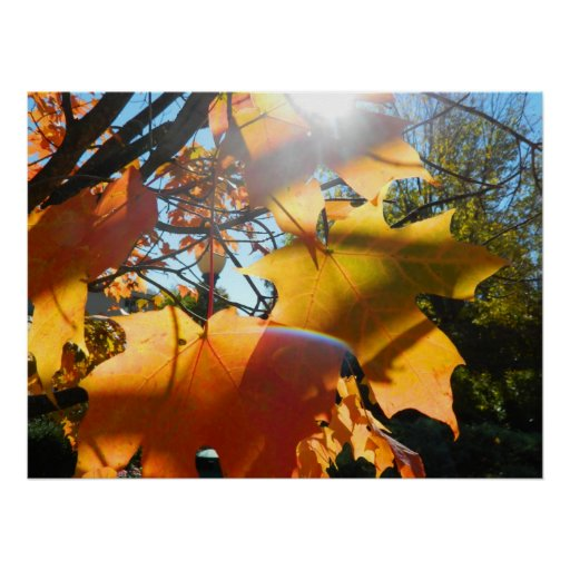 Fall Leaves in The Light Print