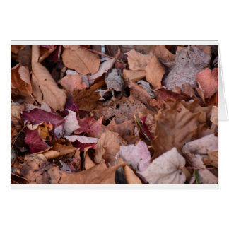 Fall leaves in the Smoky Mountains Card