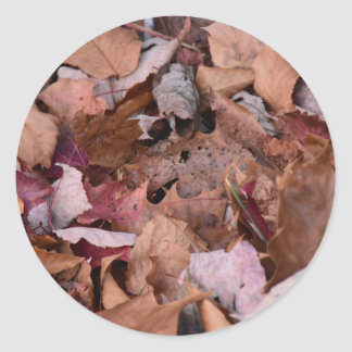 Fall leaves in the Smoky Mountains Classic Round Sticker