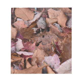 Fall leaves in the Smoky Mountains Notepad