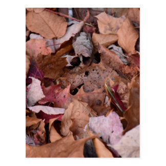 Fall leaves in the Smoky Mountains Postcard