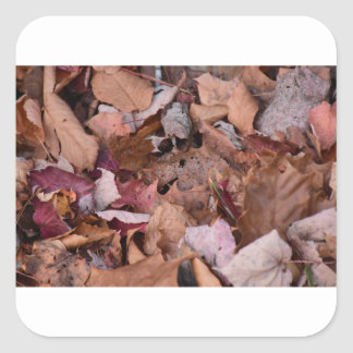 Fall leaves in the Smoky Mountains Square Sticker