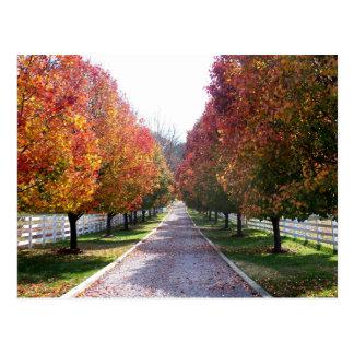 Fall Leaves in Virginia Post Card Glen Allen VA