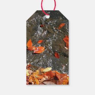 Fall Leaves in Waterfall I Autumn Photography Gift Tags