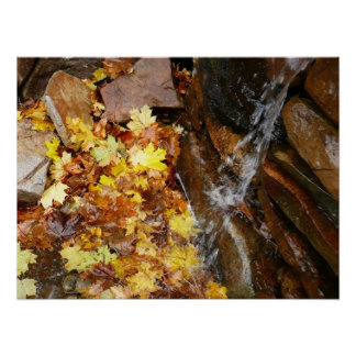 Fall Leaves in Waterfall III Autumn Nature Poster