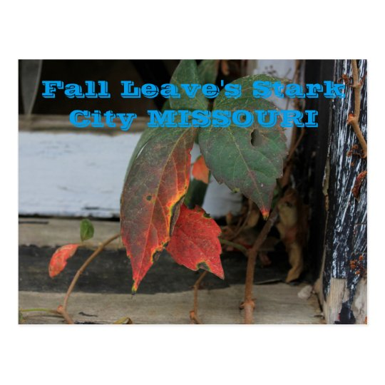 Fall Leave's Missouri Post Card