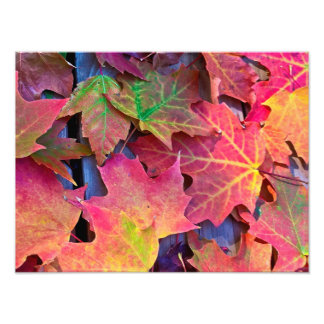 Fall Leaves Photo Print