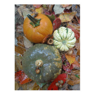 Fall leaves Pumpkins and Gourds Postcard