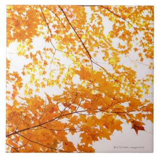 Fall Leaves Reflection Ceramic Tiles