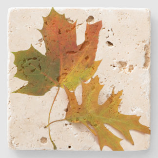 Fall Leaves Stone Coaster