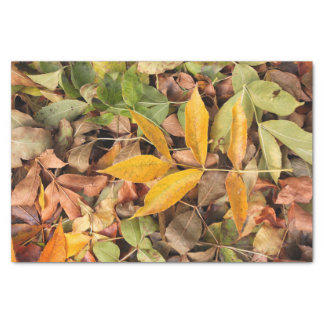 Fall Leaves Tissue Paper