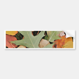 Fall leaves with yellows and green bumper sticker