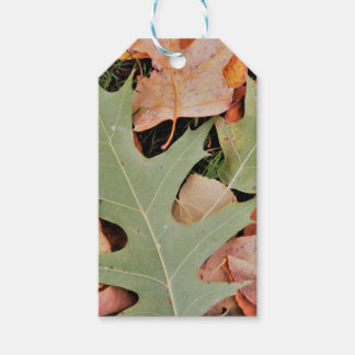 Fall leaves with yellows and green gift tags