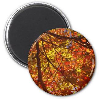 Fall Magnet