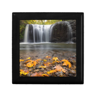 Fall Maple Leaves at Hidden Falls waterfall Gift Box
