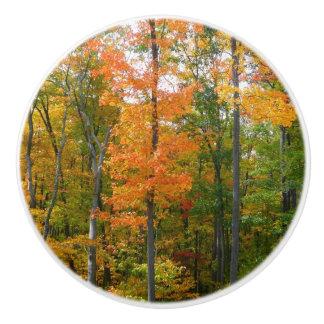 Fall Maple Trees Autumn Nature Photography Ceramic Knob
