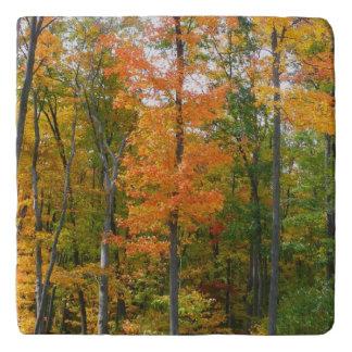 Fall Maple Trees Autumn Nature Photography Trivet