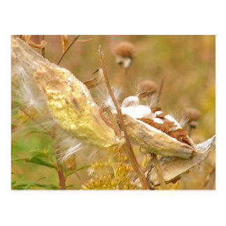 Fall Milk Pods Postcard