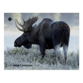 Fall - Moose Postcard