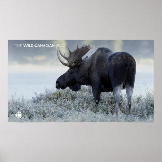 Fall - Moose Poster