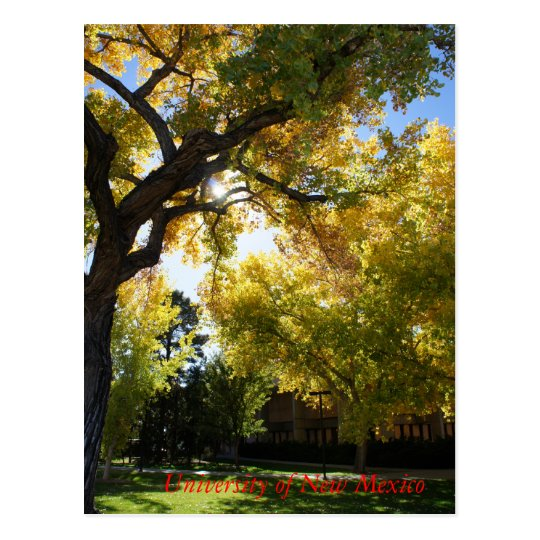 Fall on Campus II Postcard
