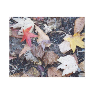 Fall on the Ground Gallery Wrap Canvas