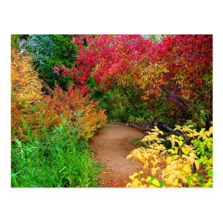 Fall Path Postcard