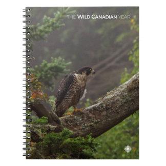 Fall - Peregrine Falcon Notebook