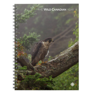 Fall - Peregrine Falcon Notebooks