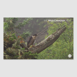 Fall - Peregrine Falcon Sticker