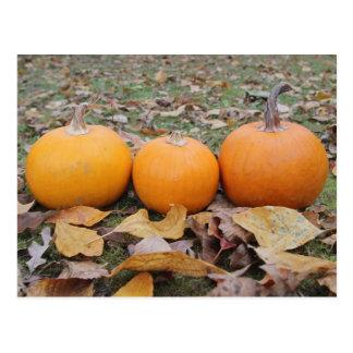 Fall Pumpkin Postcard