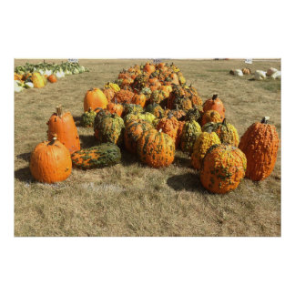 Fall Pumpkin Sale Poster