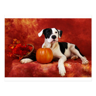 Fall puppy postcard