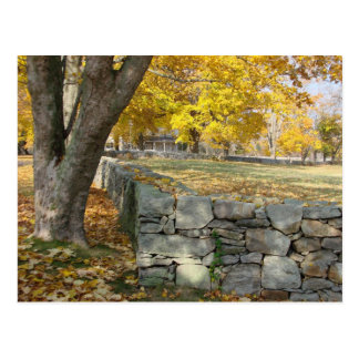 Fall scene with tree and stone wall postcard