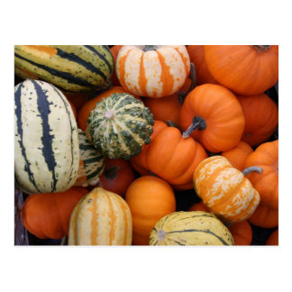 Fall Squash Harvest Postcard