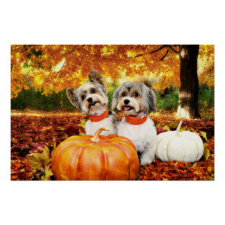 Fall Thanksgiving - Max & Leo - Yorkies Poster