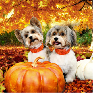 Fall Thanksgiving - Max & Leo - Yorkies Standing Photo Sculpture