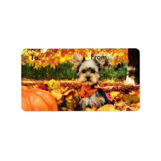 Fall Thanksgiving - Max - Yorkie
