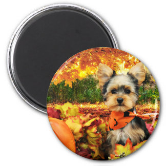 Fall Thanksgiving - Max - Yorkie 2 Inch Round Magnet
