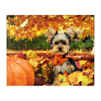 Fall Thanksgiving - Max - Yorkie Acrylic Wall Art