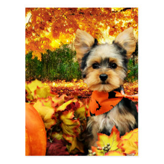 Fall Thanksgiving - Max - Yorkie Postcard