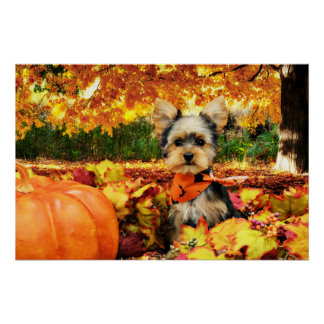 Fall Thanksgiving - Max - Yorkie Poster