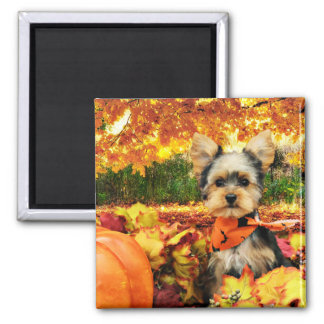 Fall Thanksgiving - Max - Yorkie Square Magnet