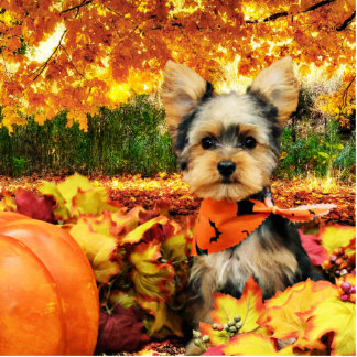 Fall Thanksgiving - Max - Yorkie Standing Photo Sculpture