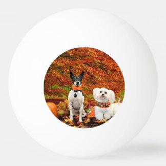 Fall Thanksgiving - Monty Fox Terrier & Milly Malt Ping Pong Ball