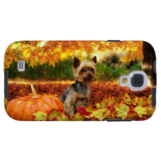 Fall Thanksgiving - Tucker - Yorkie